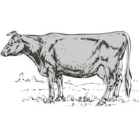 Animals   Cow Thumbnail