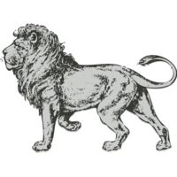 Animals   Lion 2 Thumbnail